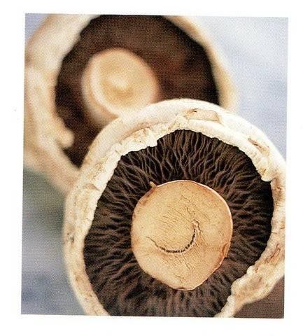 Romige paddenstoelen-saus. kan bij vele soorten vlees. recept ...