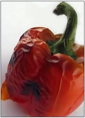 Gegrilde paprika met pijnboompitjes recept