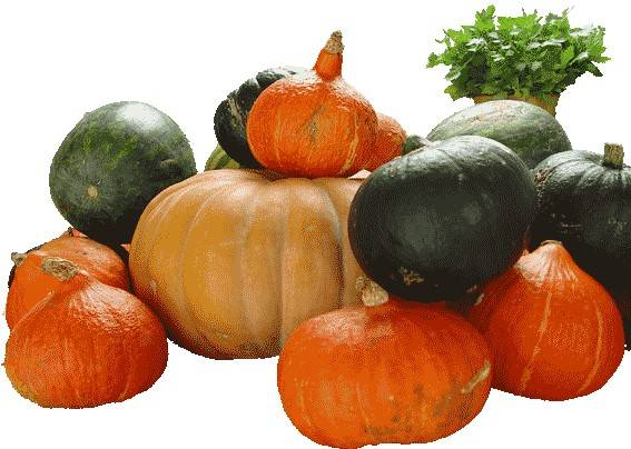 Pompoen groente schotel recept