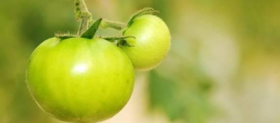 Groene tomaten chutney recept