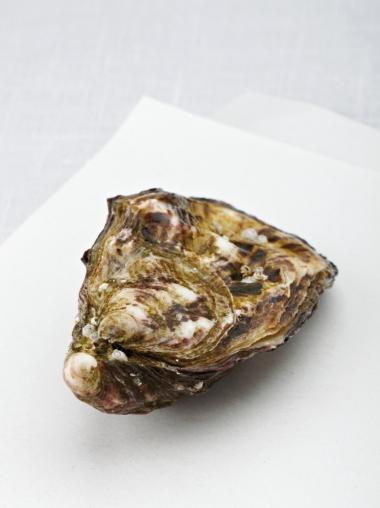 Recept 'oesterssoepje met witloof'
